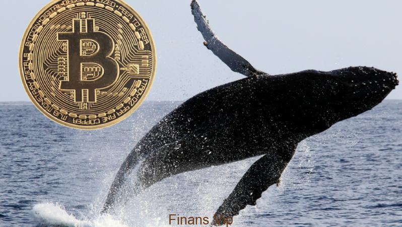 Bitcoin'de Dev Balinaların Görevi Nedir?