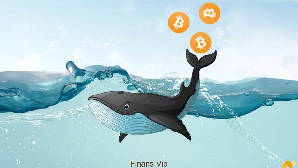 bitcoin dev balinalar